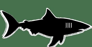 Miami Sharks BFL Logo 2_Backbreaker Football League